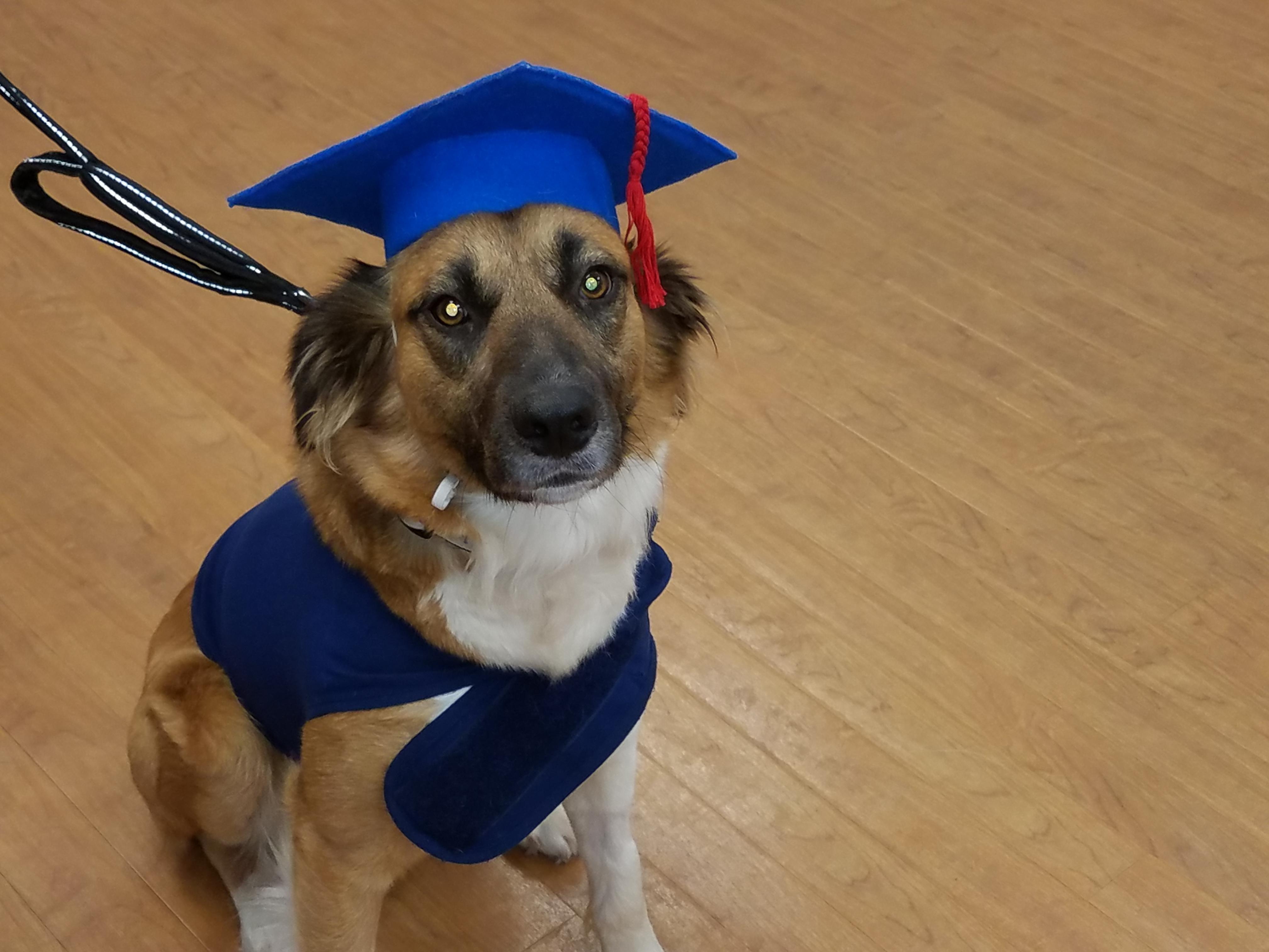 guppy graduation
